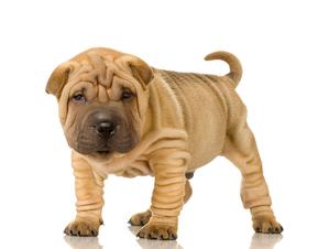 Assurance chien 2eme catégorie